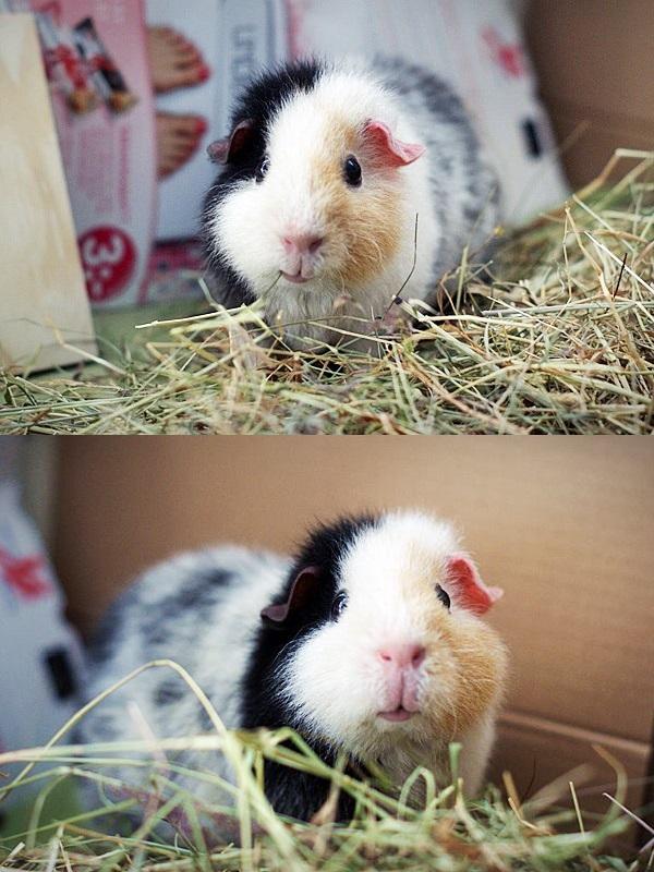 Daisys nya matte är duktig fotograf. Det är hon som tagit de här två bilderna i hennes nya hem.